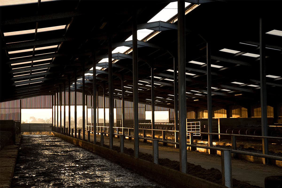 Rawhead Cattle Shed